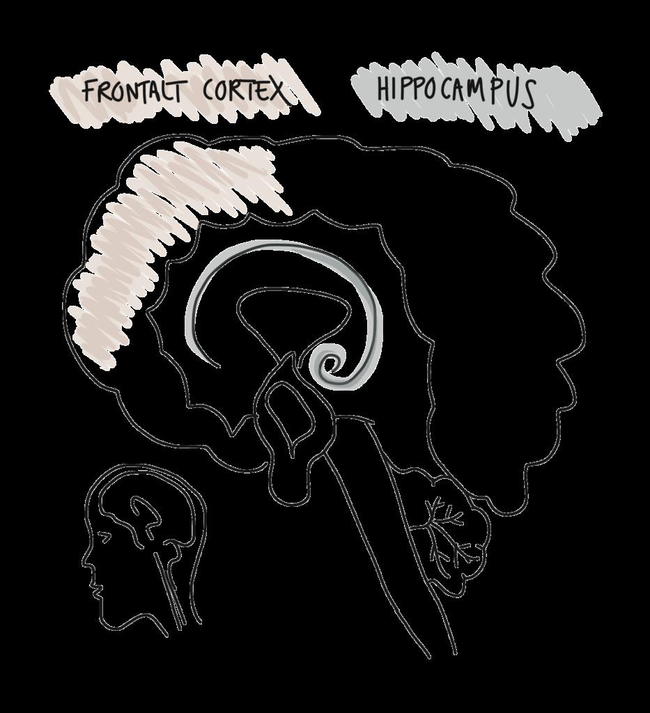 Stress kan medføre depressive symptomer over tid, fordi stressresponsen nedslider kroppen og de psykologiske ressoircer. Stressrepsonsen påvirker også hippocampus (lagring og genhentning af hukommelsesspor) og det frontale cortex (problemløsning og tænkning) og det tænkningen bliver nemt mere ufleksibel og negativ.