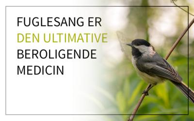 Fuglesang er den ultimative beroligende medicin